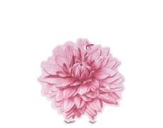 Sfumature di Dalia fiore profumato multiuso
